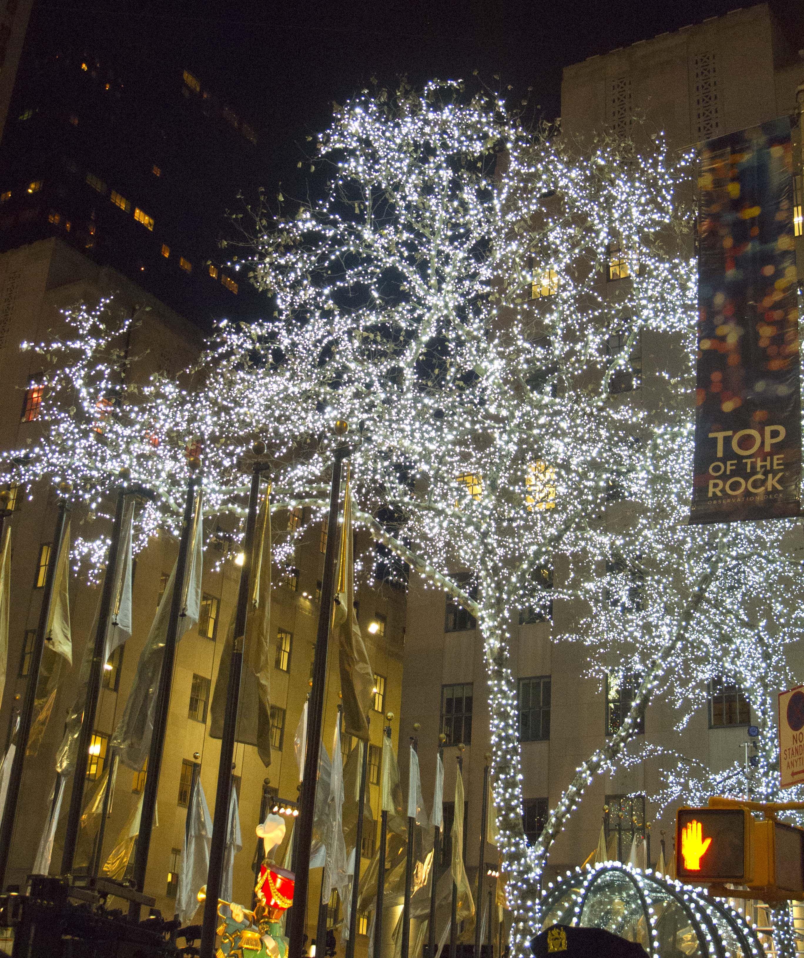 Rockefeller Christmas Tree Lighting 2014: Rockefeller Center Trees With White Holiday Lights. Happy