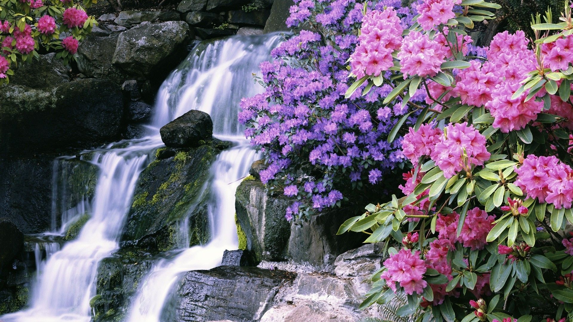 Most Beautiful Waterfalls With Flowers Download 1920x1080 Flowers Garden Crystals Oregon Portland Waterfalls Waterfall Spring Garden Lovely Flowers Wallpaper