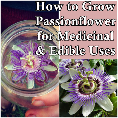How To Grow Passionflower For Medicinal And Edible Uses Garden Project Medicinal Plants Passion Flower Edible Plants