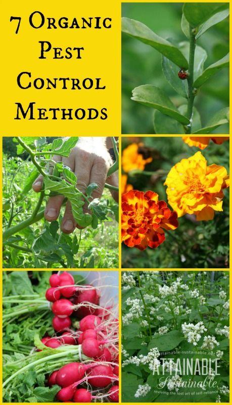 7 Organic Pest Control Methods Organic Gardening Tips Organic Vegetable Garden Organic Pest Control