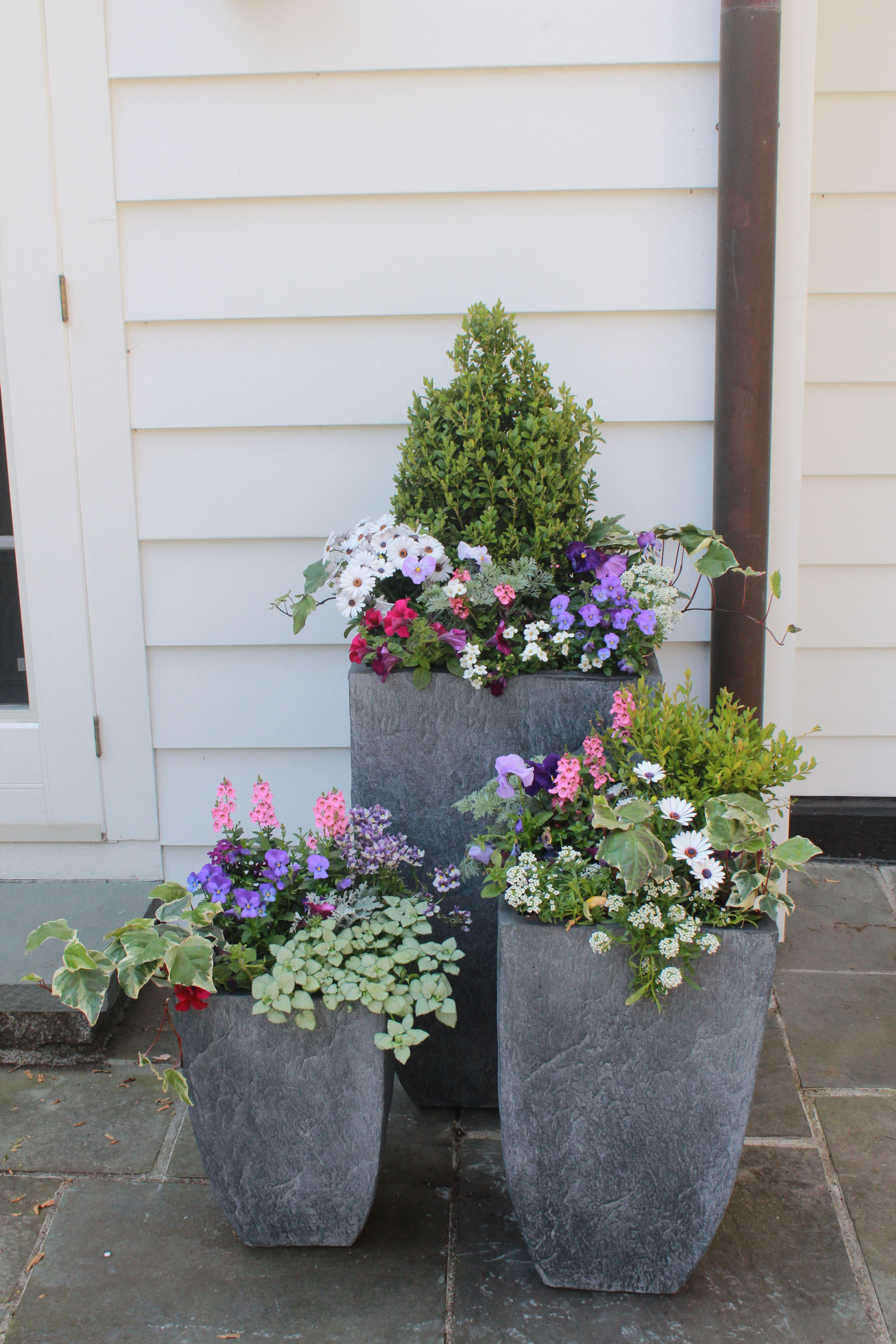Photo of Spring container gardens by Nielsen's