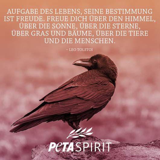 Besten Bilder Von Leo Tolstoi Philosophy Proverbs Quotes Und Quotes