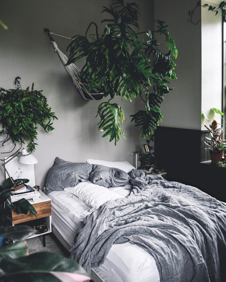 stunning plants that will make you feel things bedroom