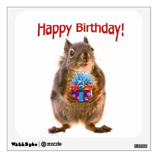 Happy Birthday Squirrel With Present Room Decal Zazzlers Birthday