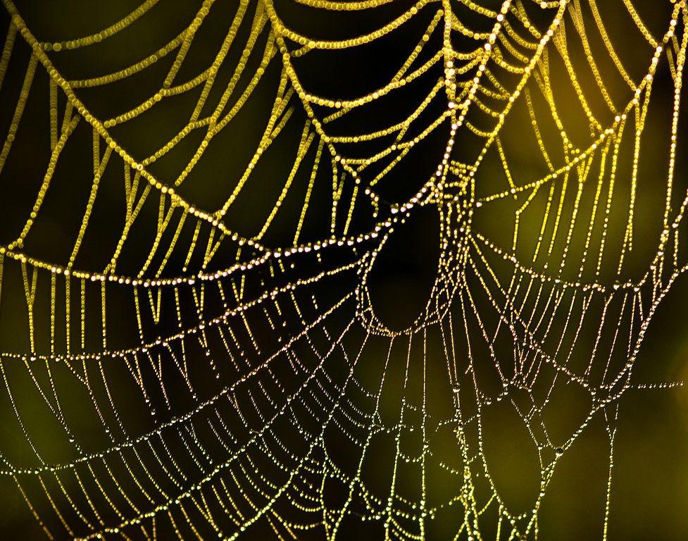 Porque Eu Amo Tanto Uma Teia Spider Web Golden Web Spider Art