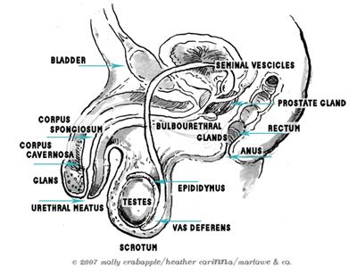 With Pleasure: A View of Whole Sexual Anatomy for Every Body ...