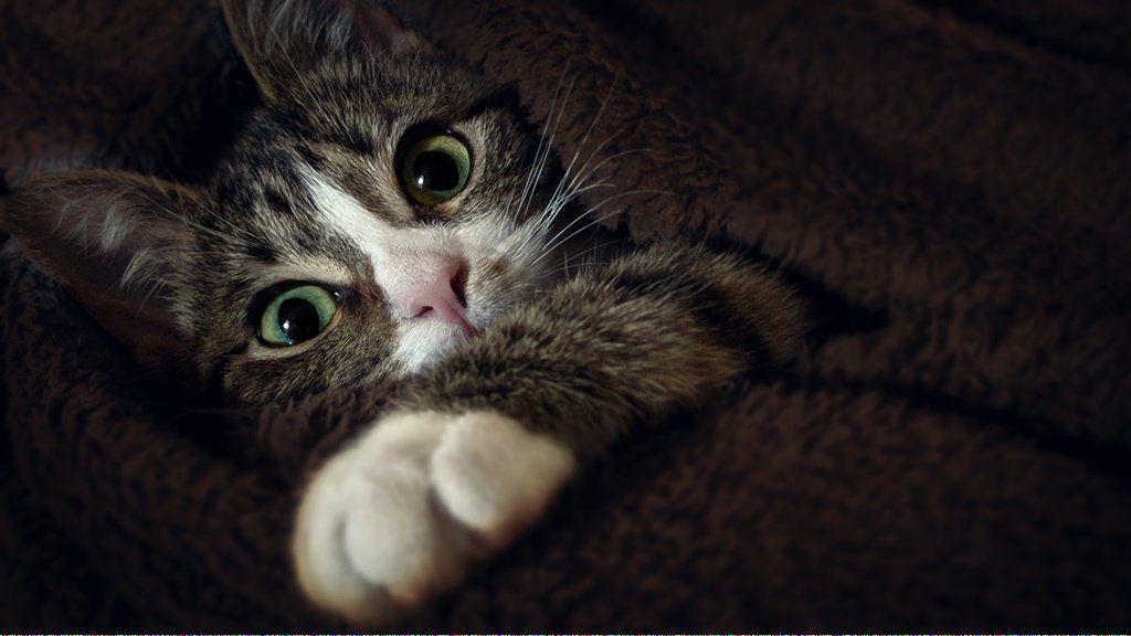 Can Cats Drink Milk Catsarebetterthandogs Why Do Cats Purr Cat Purr Cat Vs Dog