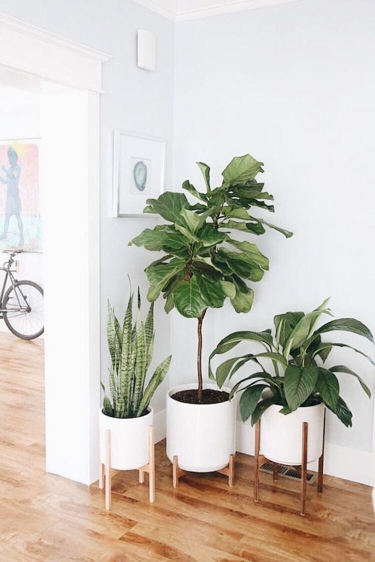 Superbe coin de plante dintérieur mis en place