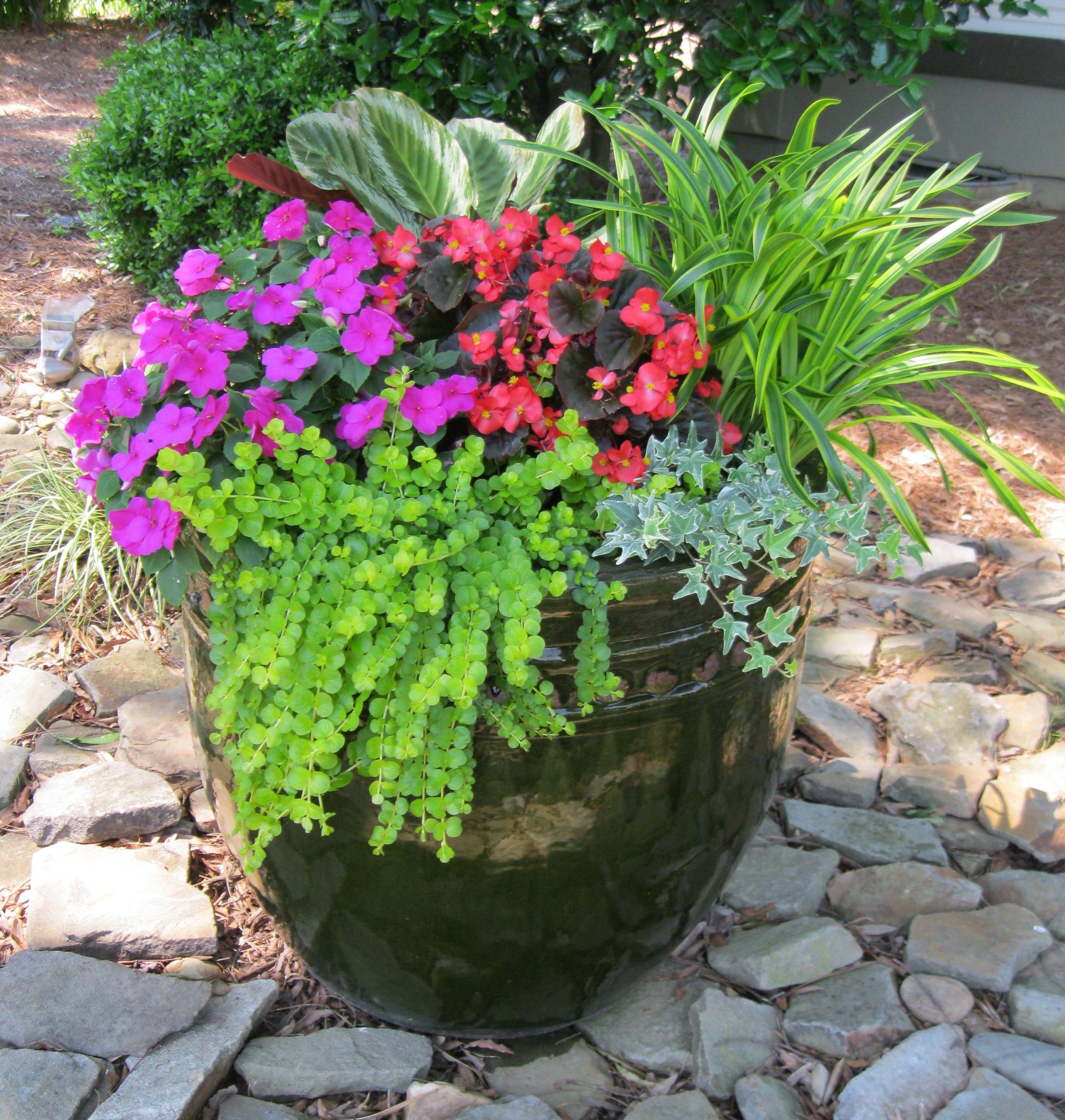 8 Stunning Container Gardening Ideas: My Front Yard Container Garden