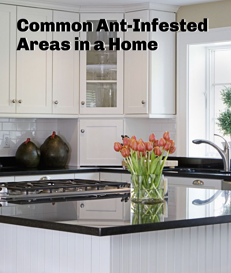 Great Your Kitchen Countertops Can Make Cooking Feel Like Fun Or A Nightmare.  Check Out These Pros And Cons Of Each Type Before Settling On One.