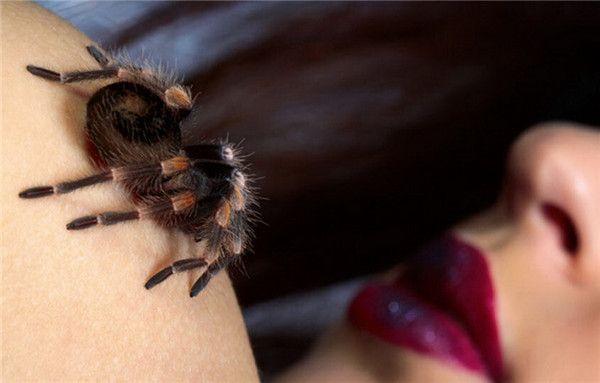 关于蜘蛛的十大事实 有些种类不会结网 Behind Ear Tattoo Ear