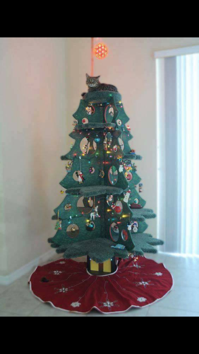 Cat Condo Christmas Christmas cats, Cat tree