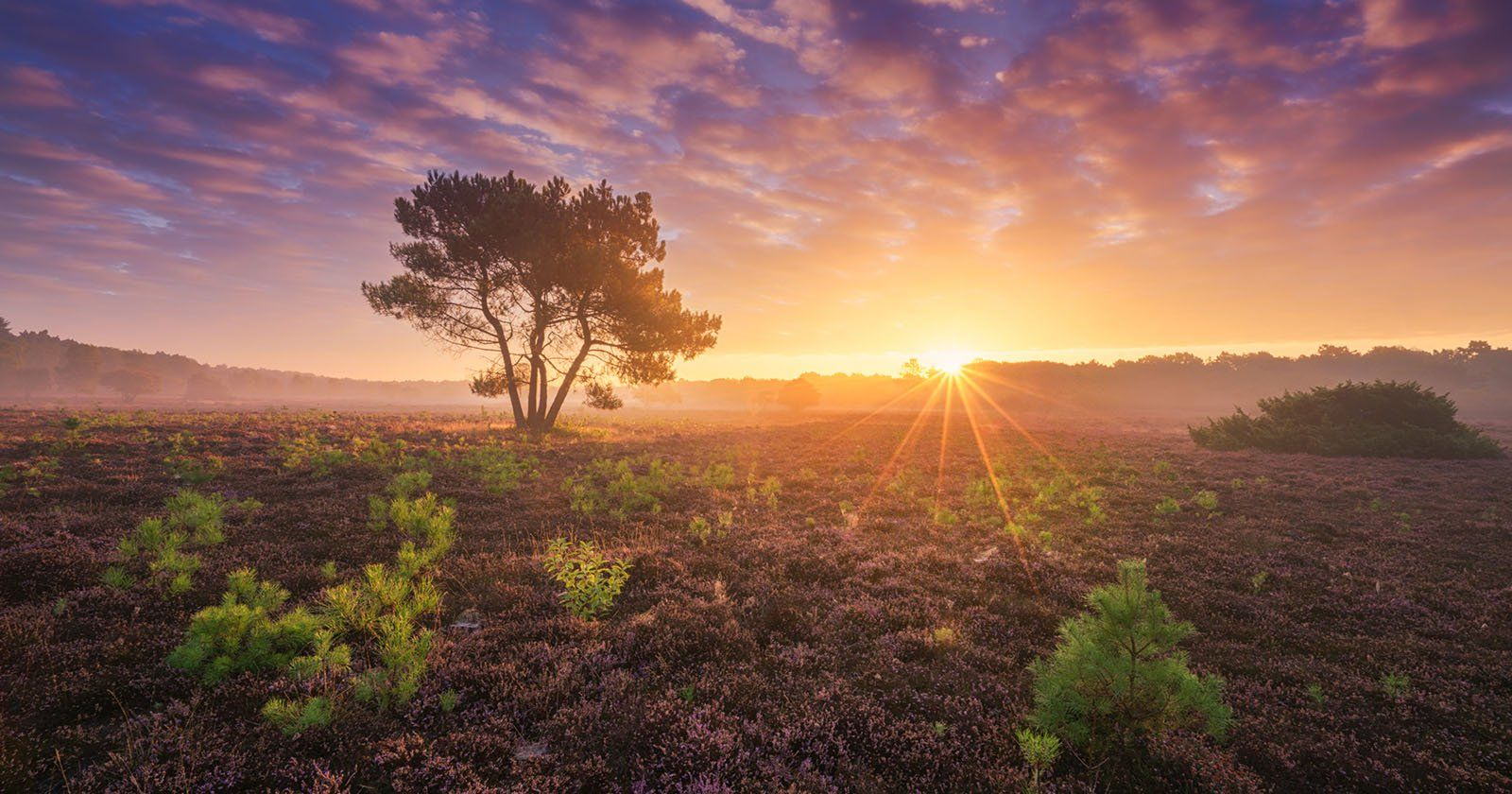 10 Tips To Take Your Landscape Photos To The Next Level Landscape Photos Landscape Photography Landscape Pictures