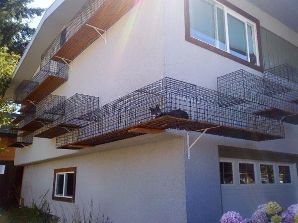 The Best Cat Walkway Ever