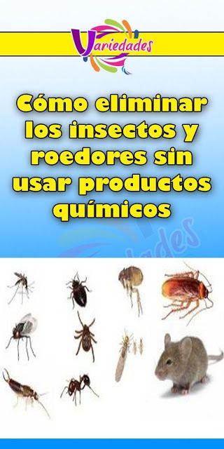 Como Acabar Con Las Moscas De Casa Como Matar Las Moscas Mosquitos Y Cucarachas De Tu Casa En Solo 2