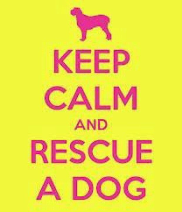 Volunteer, foster, rescue, donate, adopt!! =))