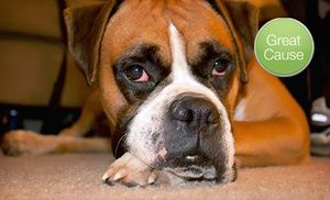 Groupon - $ 10 Donation to Care for Rescued Dogs in Online Deal. Groupon deal price: $10.00
