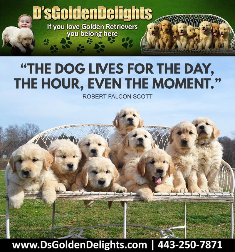 The Dog Lives For The Day The Hour Even The Moment Robert