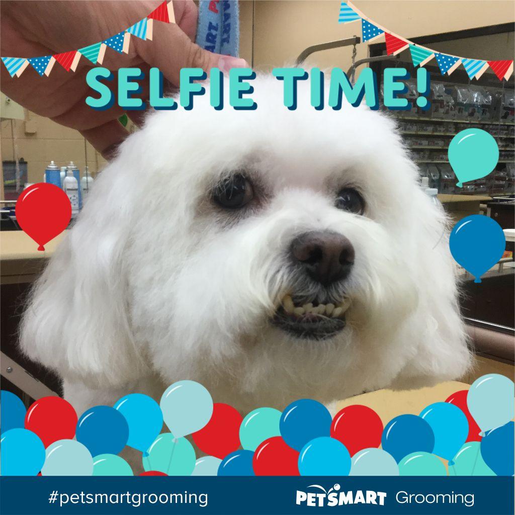 Doggie Spa Day Petsmart Grooming Pets Petsmart