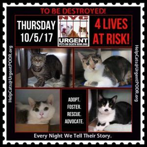 Help Us Save Nyc Ac C Shelter Cats Cat Shelter Saving Cat Foster Cat