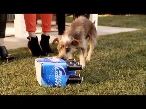 Humour appeal bud light super bowl commercial 2012 rescue dog dog humour appeal bud light super bowl commercial mozeypictures Choice Image
