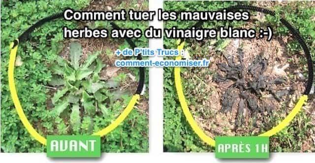 l'astuce rapide pour tuer les mauvaises herbes avec du vinaigre