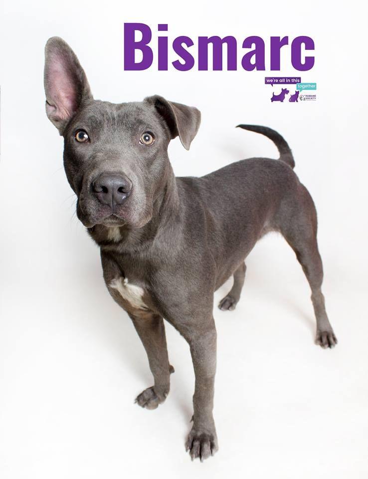 Hi, I'm Bismarc! I'm a smart 2 year old boy looking for my