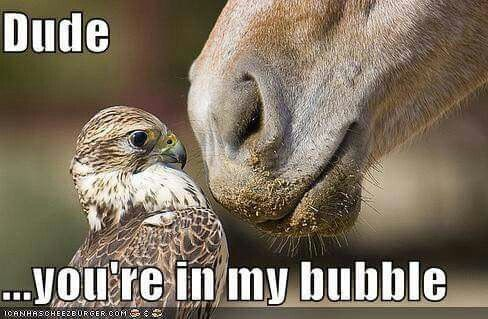 Serious bubble invasion, buddy. Step out of the bubble. #INTJ #Capricorn #Introvert