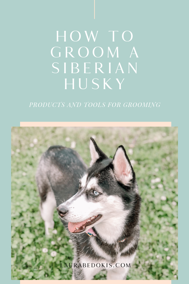 How To Groom Your Siberian Husky (With images) Husky