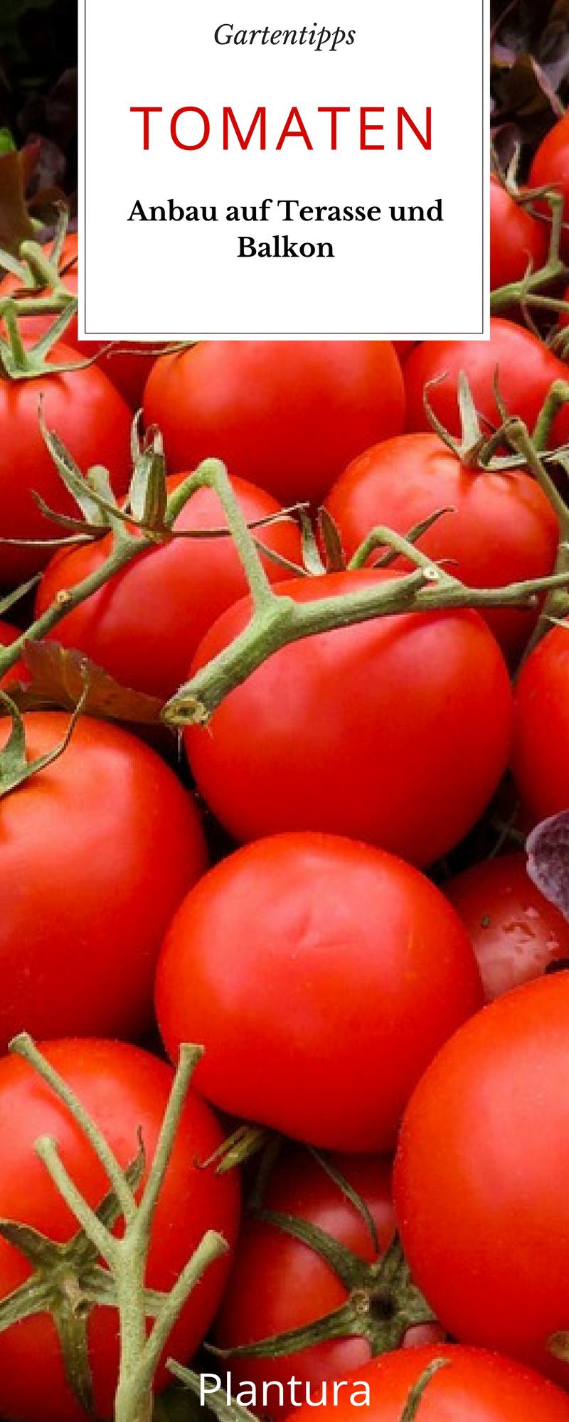 Tomaten Anbau Auf Terrasse Und Balkon Blogger Rezepte Pinterest