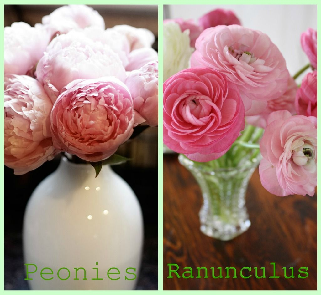 Ok I See A Lot Of You Guys Out There Are Having Problems Telling The Difference Between Peonies Ranunculus So Here Is A Quick Les Ranunculus Flowers Peonies