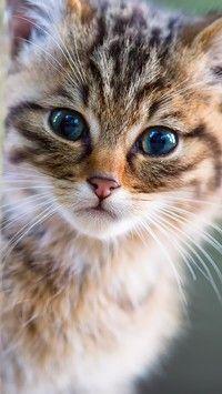 Zapatrzony Kot Tapety Na Telefon Tapeciarniapl Pinterest Cats
