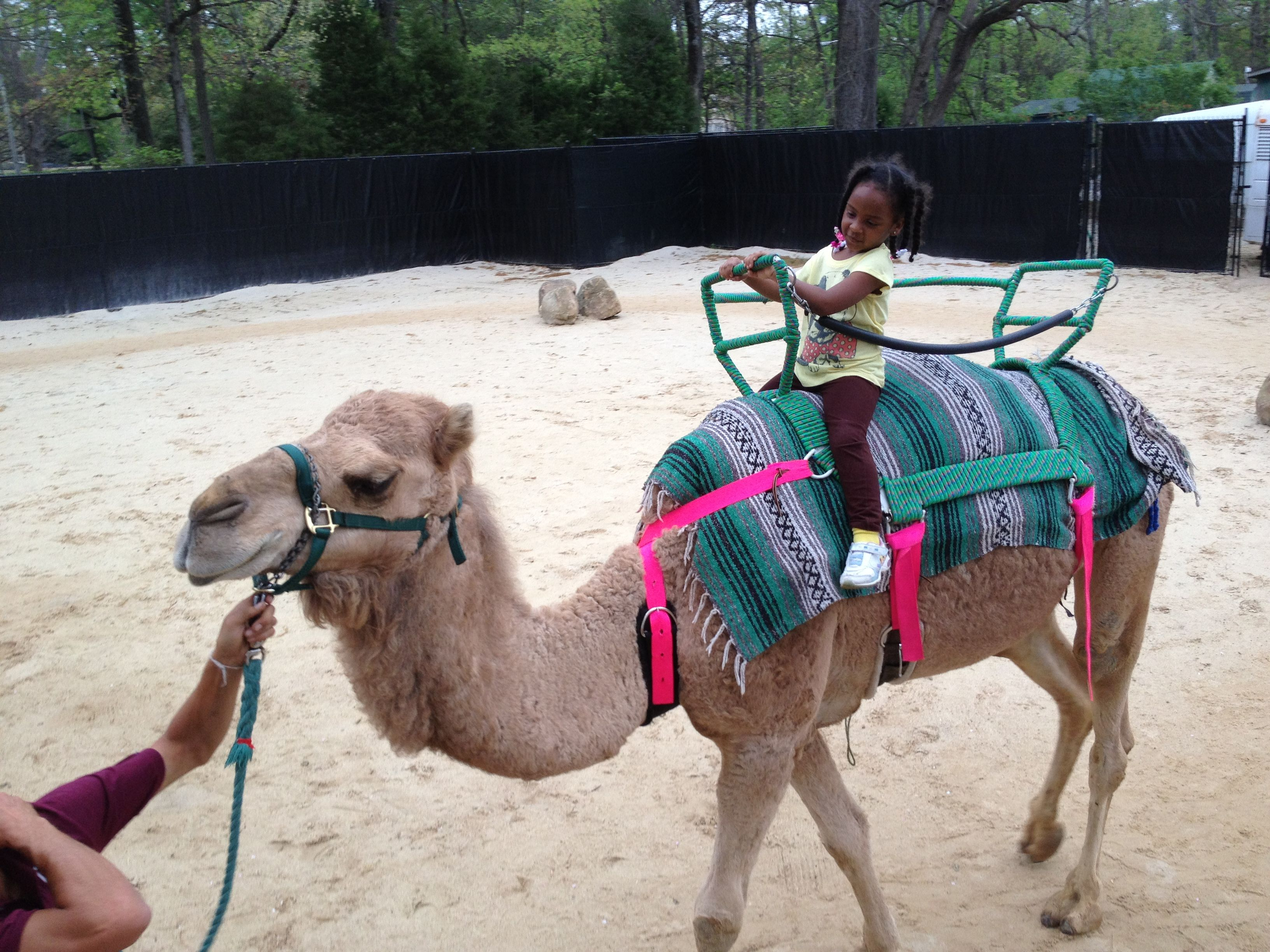 Memphis zoo memphis zoo memphis zoo