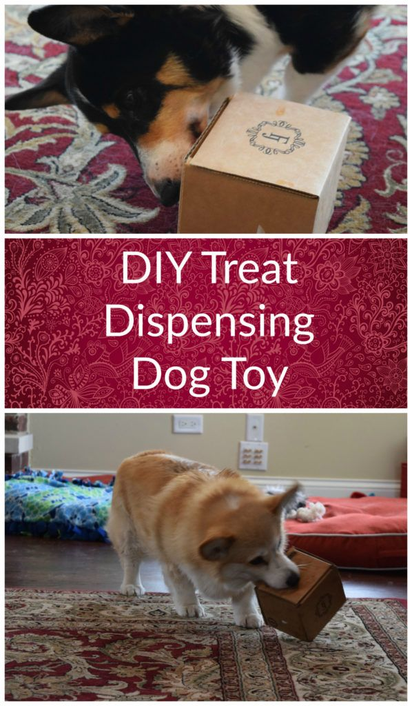 Blogger Challenge Diy Treat Dispensing Dog Toy Dog Toys Diy