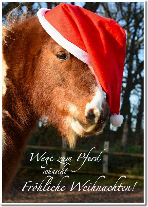 Frohe Weihnachten Pferd.Wege Zum Pferd Wünscht Fröhliche Weihnachten Pferde Horses