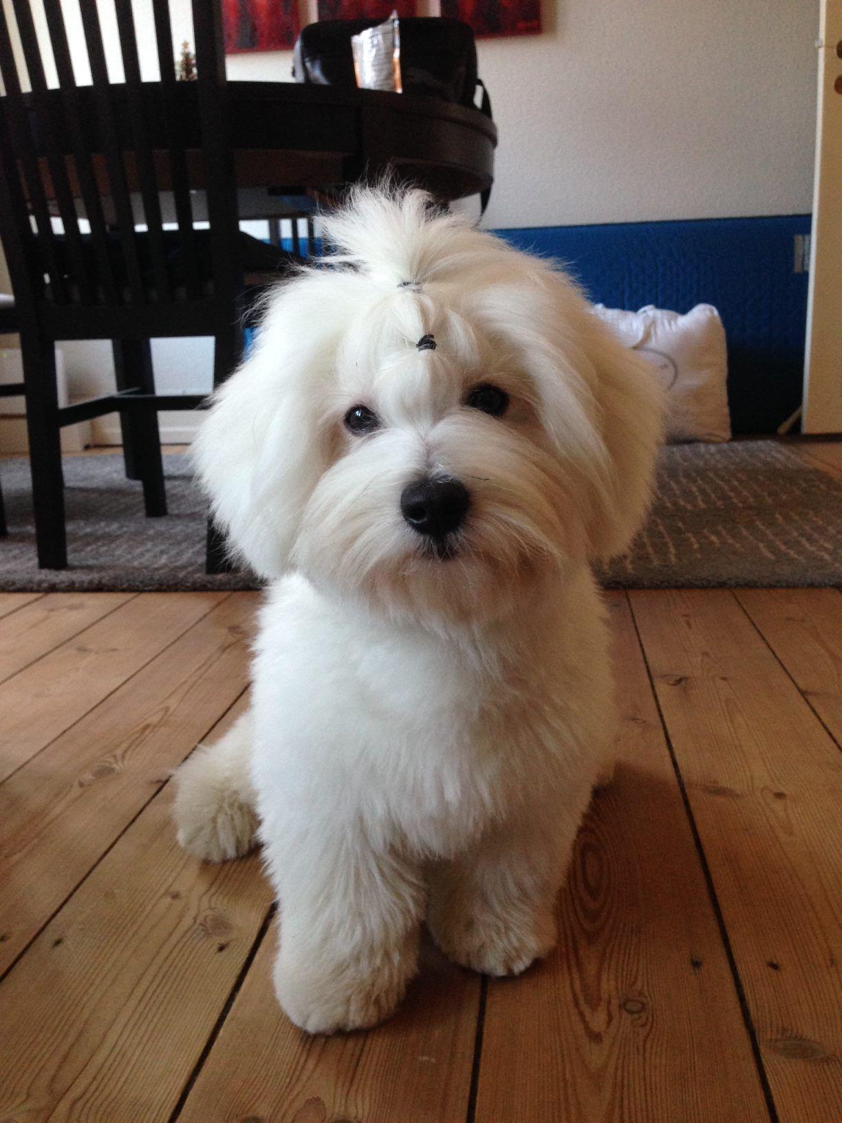 Puppy cut