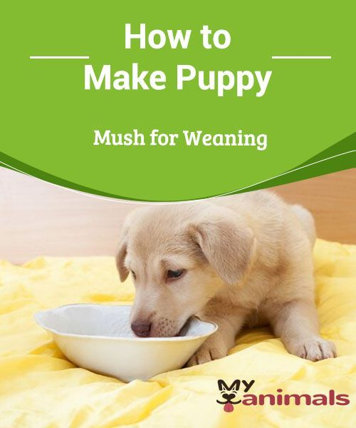 How To Make Puppy Mush For Weaning Dogs Have Different Nutritional