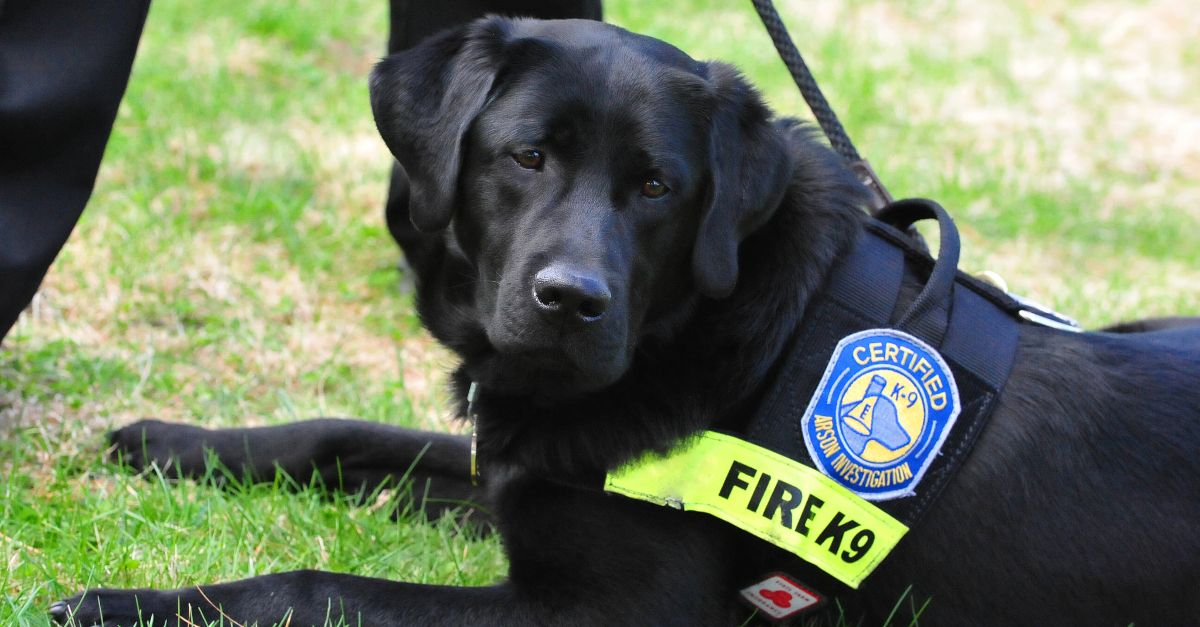 From Shelter Rescue To Police Dog These Canines Get A New Leash