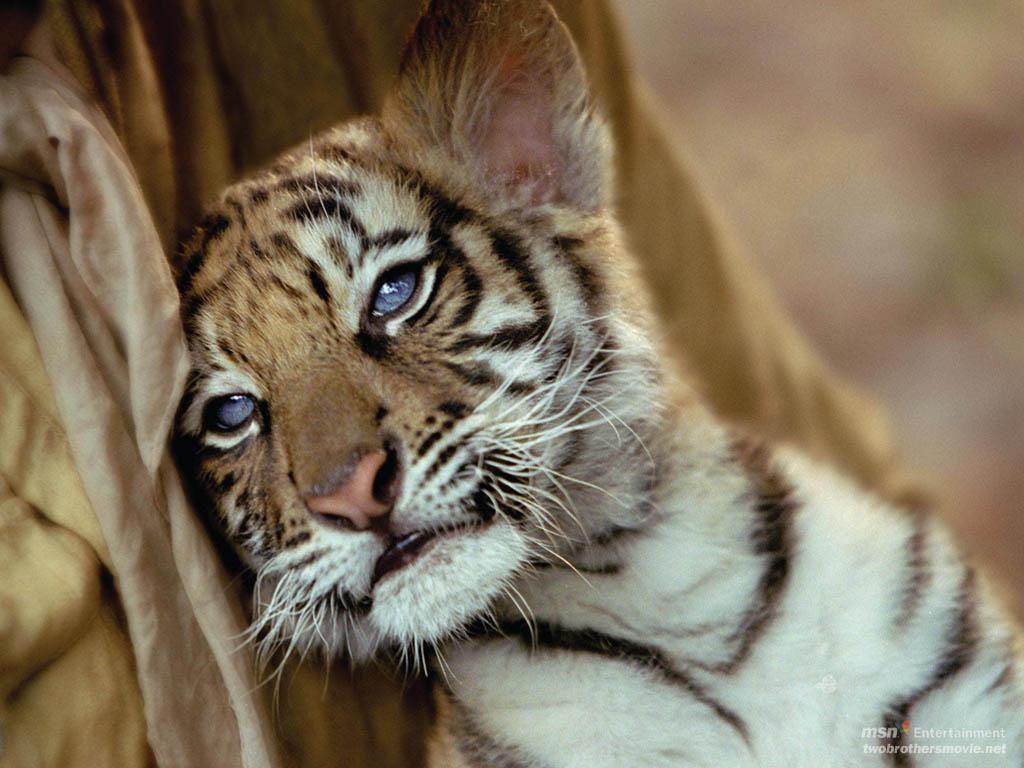 snuggles animals Pinterest
