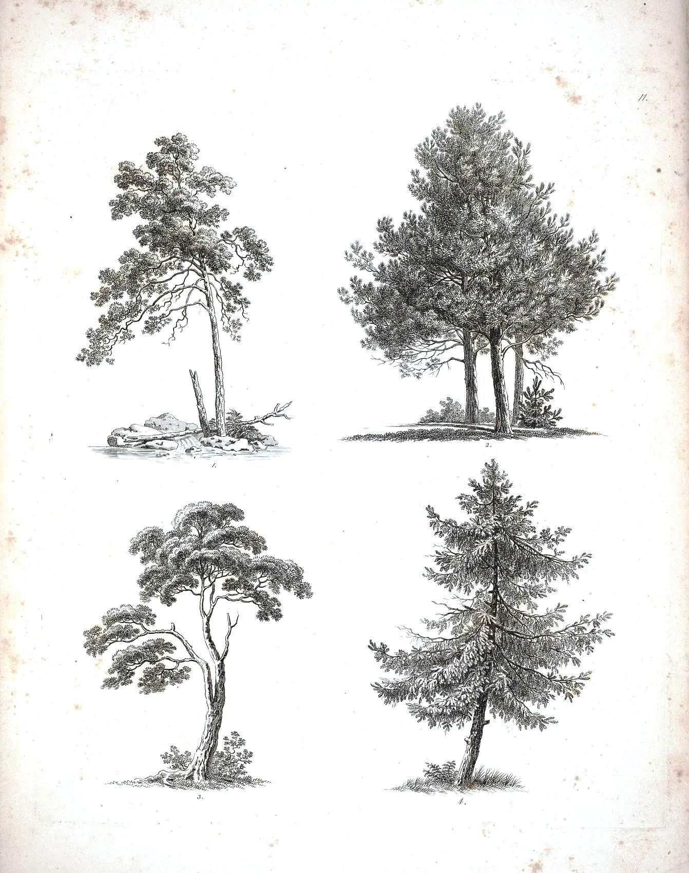 how to draw back round trees
