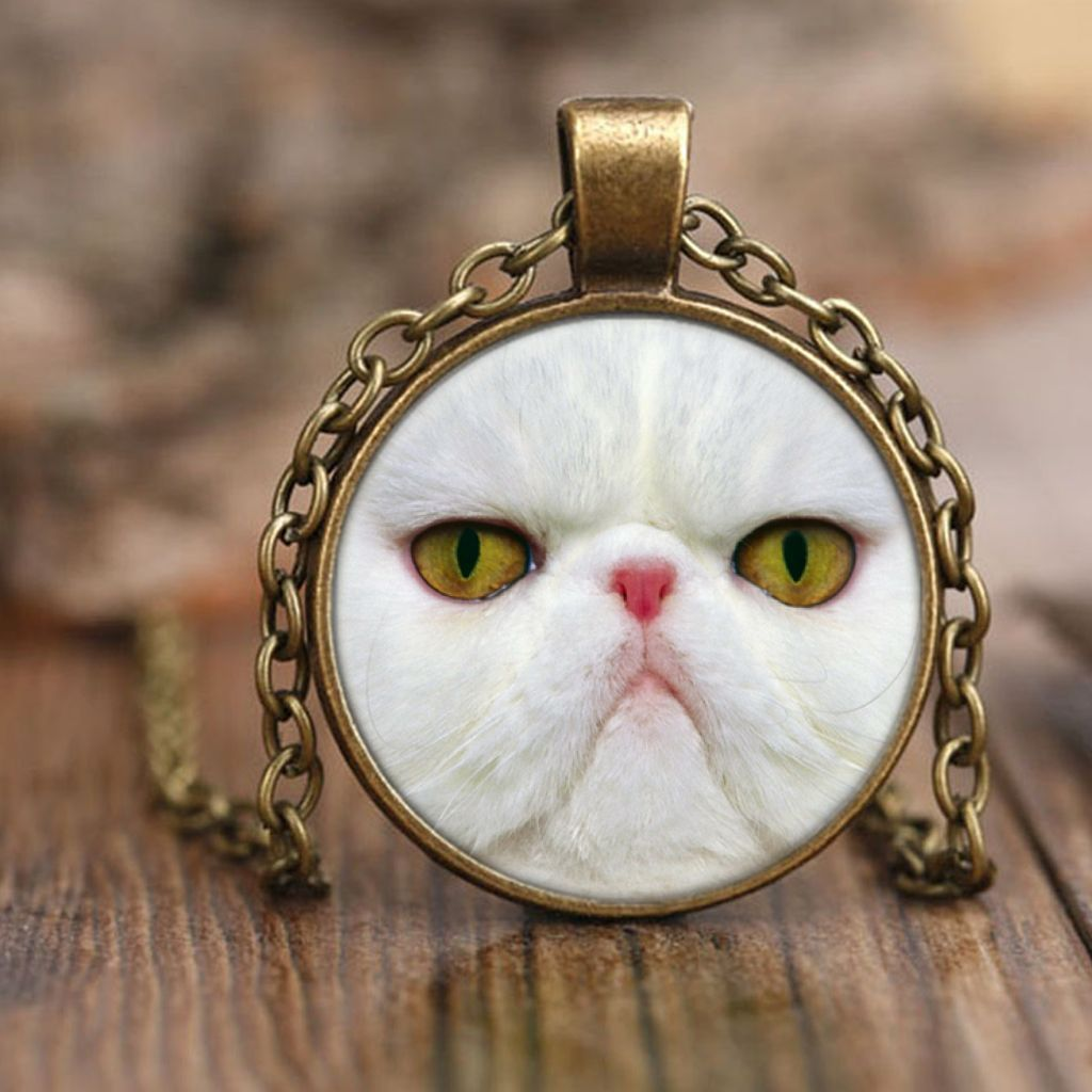 What Do You Need to Keep in Mind When You Buy Persian Cat