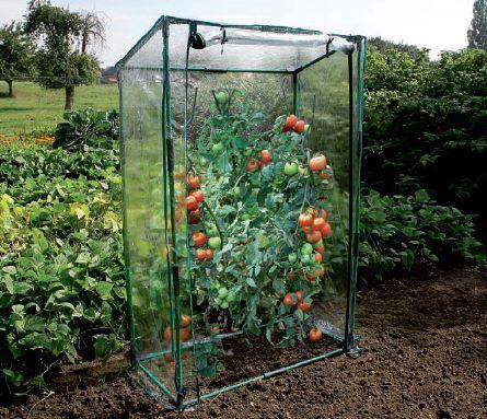 Serre De Jardin Pour Tomates 0 50 M Serre A Tomate Serre
