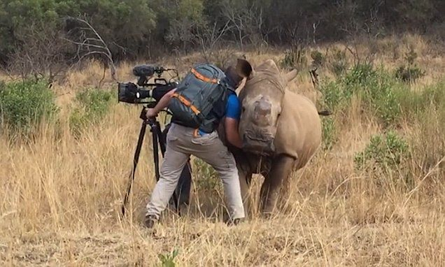 This South African cameraman is so friendly with the animals he films that pets them at the end of the day. Footage shows Garth de Bruno Austin stroking the female who left his camera alone.
