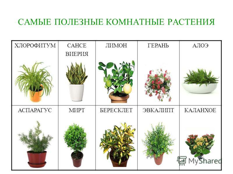 названия комнатных цветов растений список с фото одной особенностью