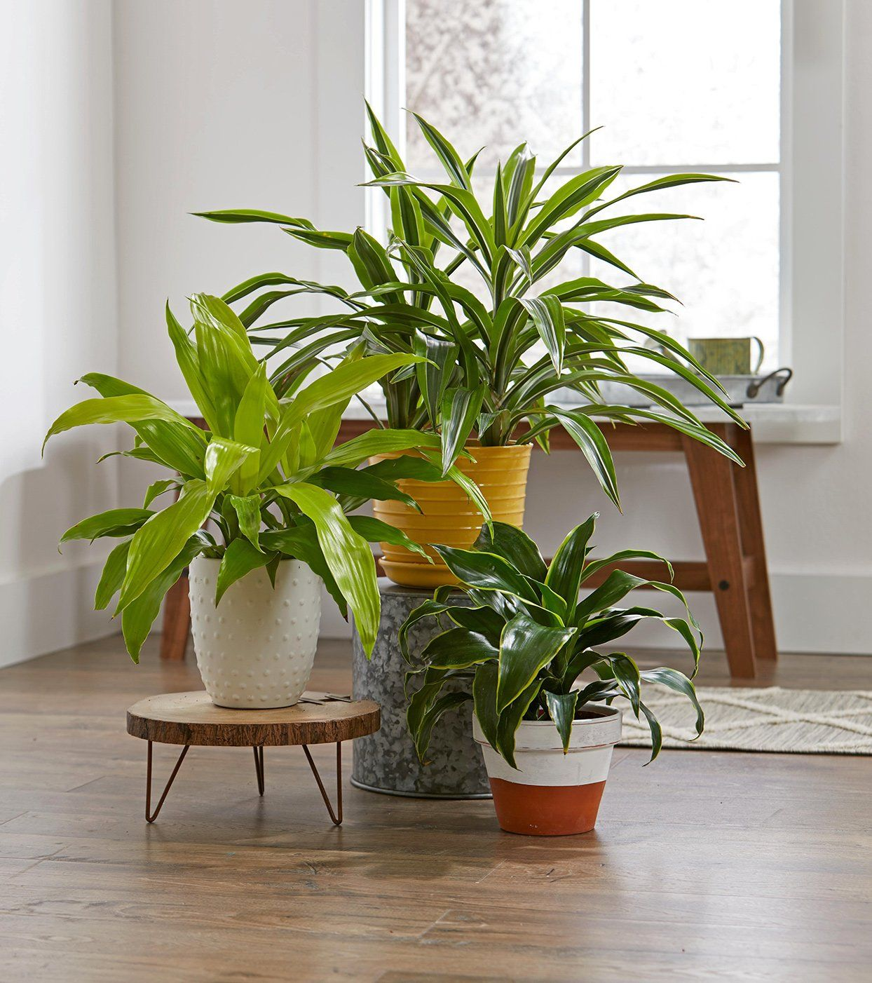 these are the 15 best houseplants for your bedroom