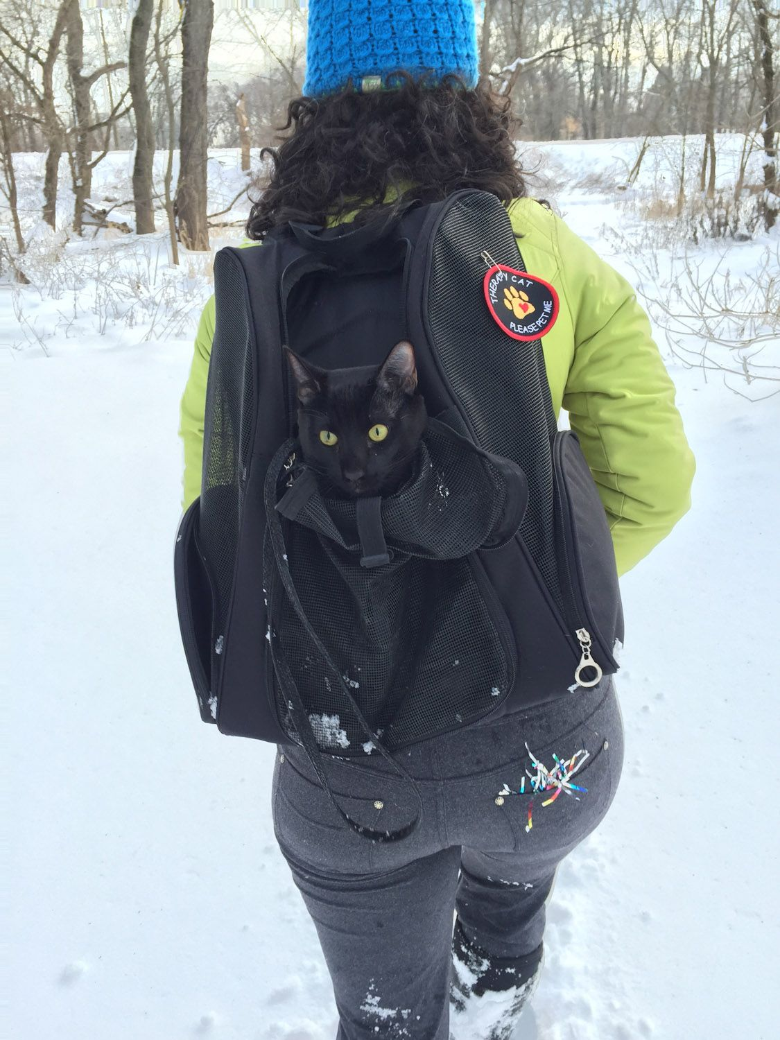 What backpacks are best for cats? Adventure cat, Cat