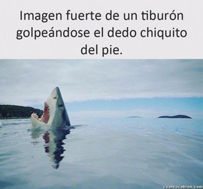 Le Pasa Hasta A Los Tiburones Humor Risas Venezuela Memes Humorlatino Amor Humorvenezolano Chiste Chistetipico Fo Best Memes Memes En Espanol Memes