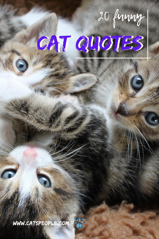 20 Funny Cat Quotes Cat Quotes Cats Cat Dad
