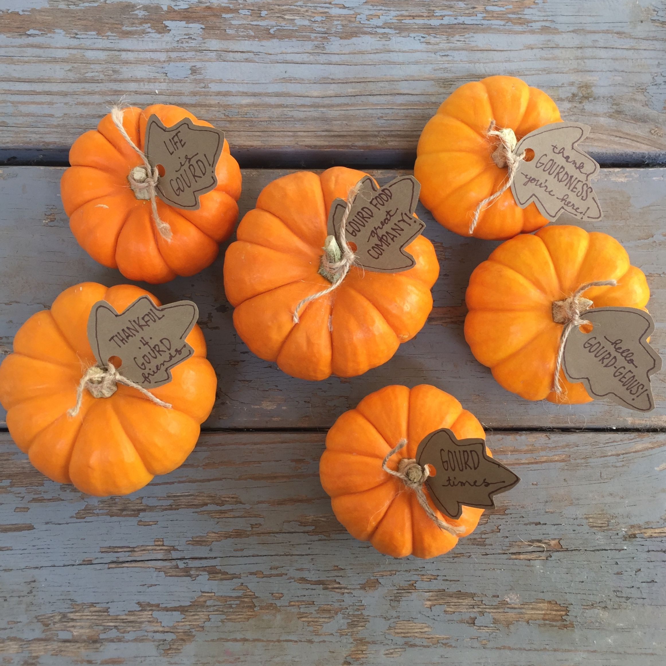 Pumpkin Puns With Images Pumpkin Puns Pumpkin Fall Puns