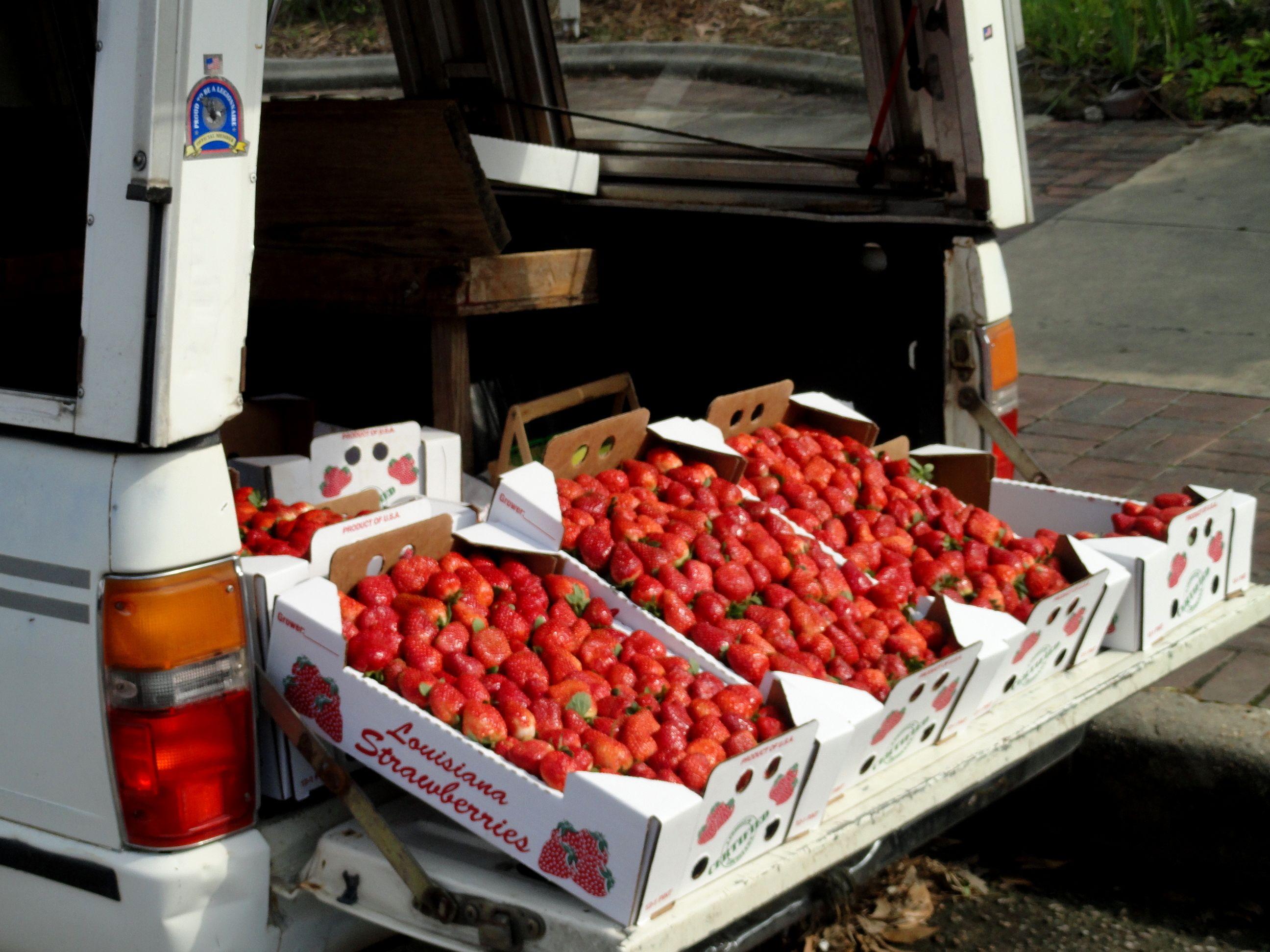 Strawberry capital of the world - Ponchatoula - Louisiana